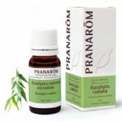 Aceite esencial eucalipto radiata (10 ml)